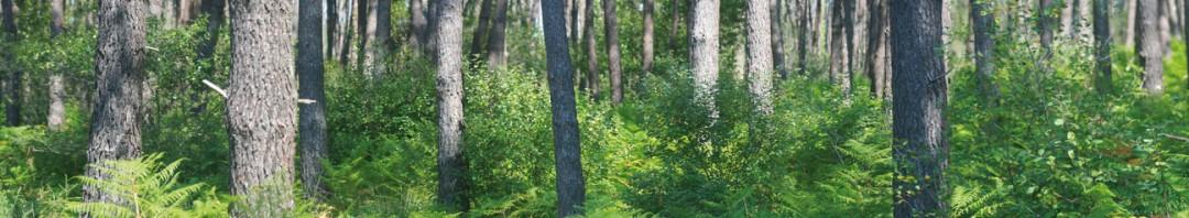 Trouver tous les conseils pour vous chauffer au bois